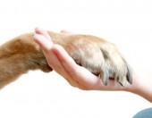 Обламывание когтей у собаки