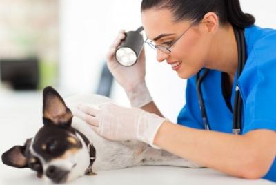 Онкологическое уплотнение. Удаление жировиков у кошек и собак. Онкологические заболевания у собак. Шишки у собак на спине и шишки у собак на коже.
